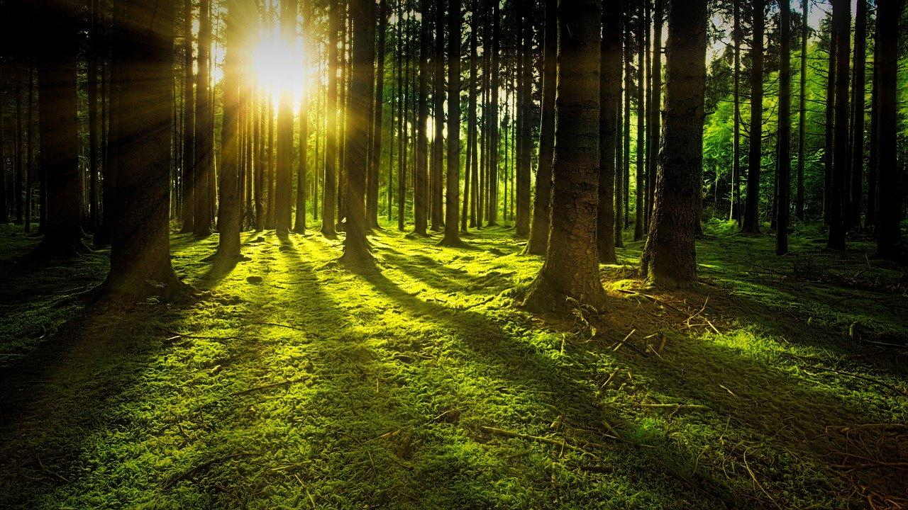 Investissement forestier, en quoi ça consiste ?